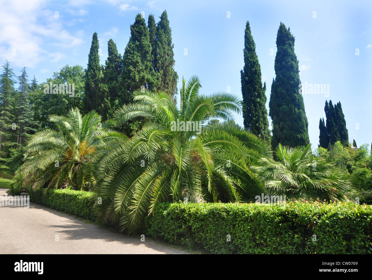 Palm-trees and cypresses in Sochi Arboretum - Stock Image