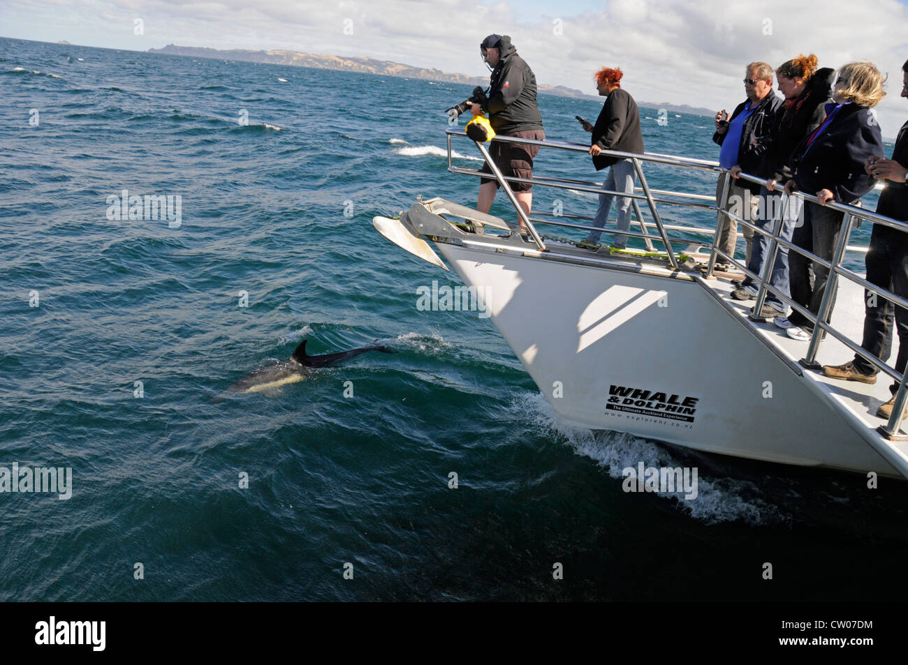 Tourists on the deck of a 'Whale & Dolphin' vessel, watching Common Dolphins in the Hauraki Gulf,Auckland - Stock Image