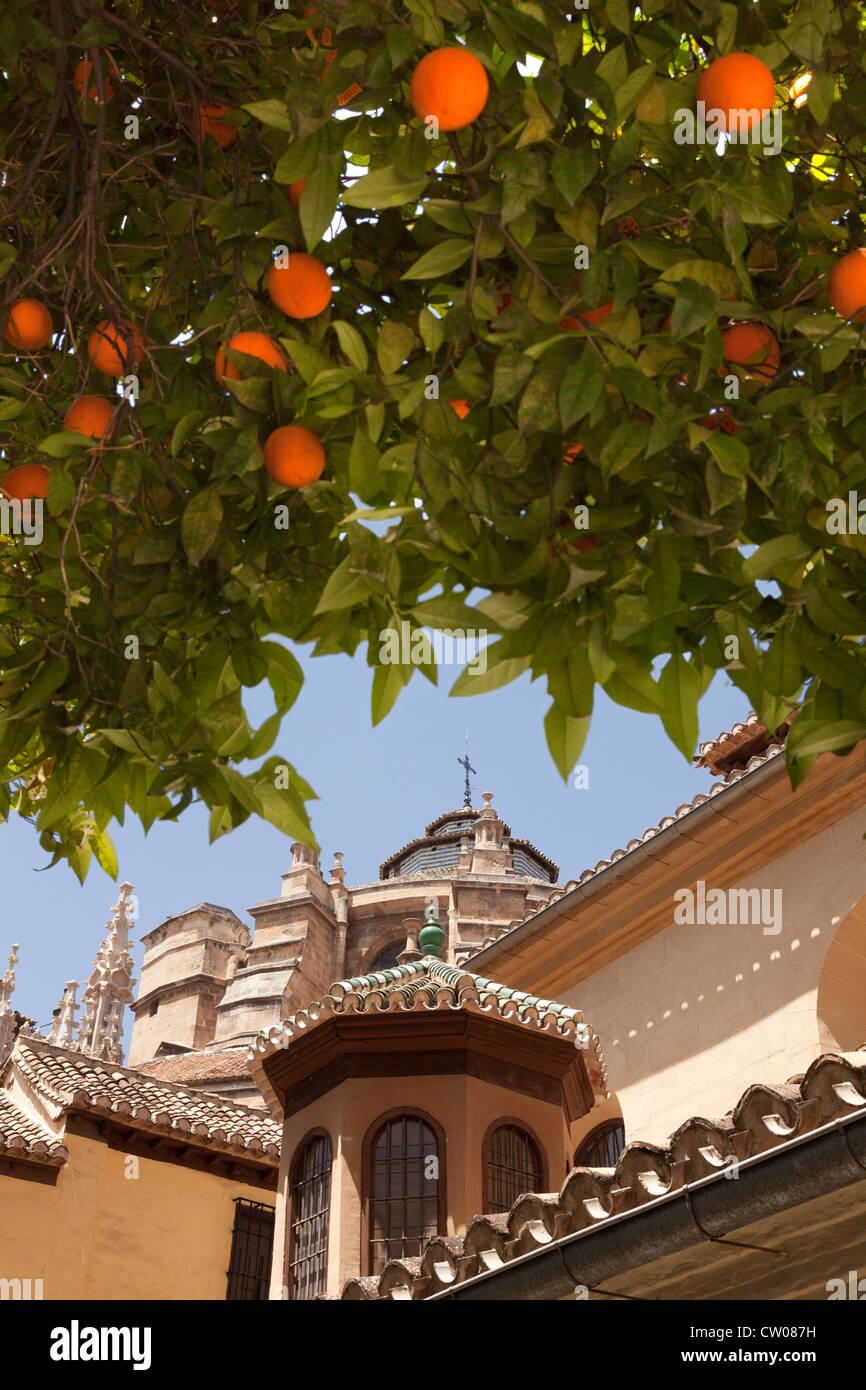 Granada Cathedral, Andalucia, Andalusia, Spain, Europe. Seen from under beautiful orange fruit trees. - Stock Image