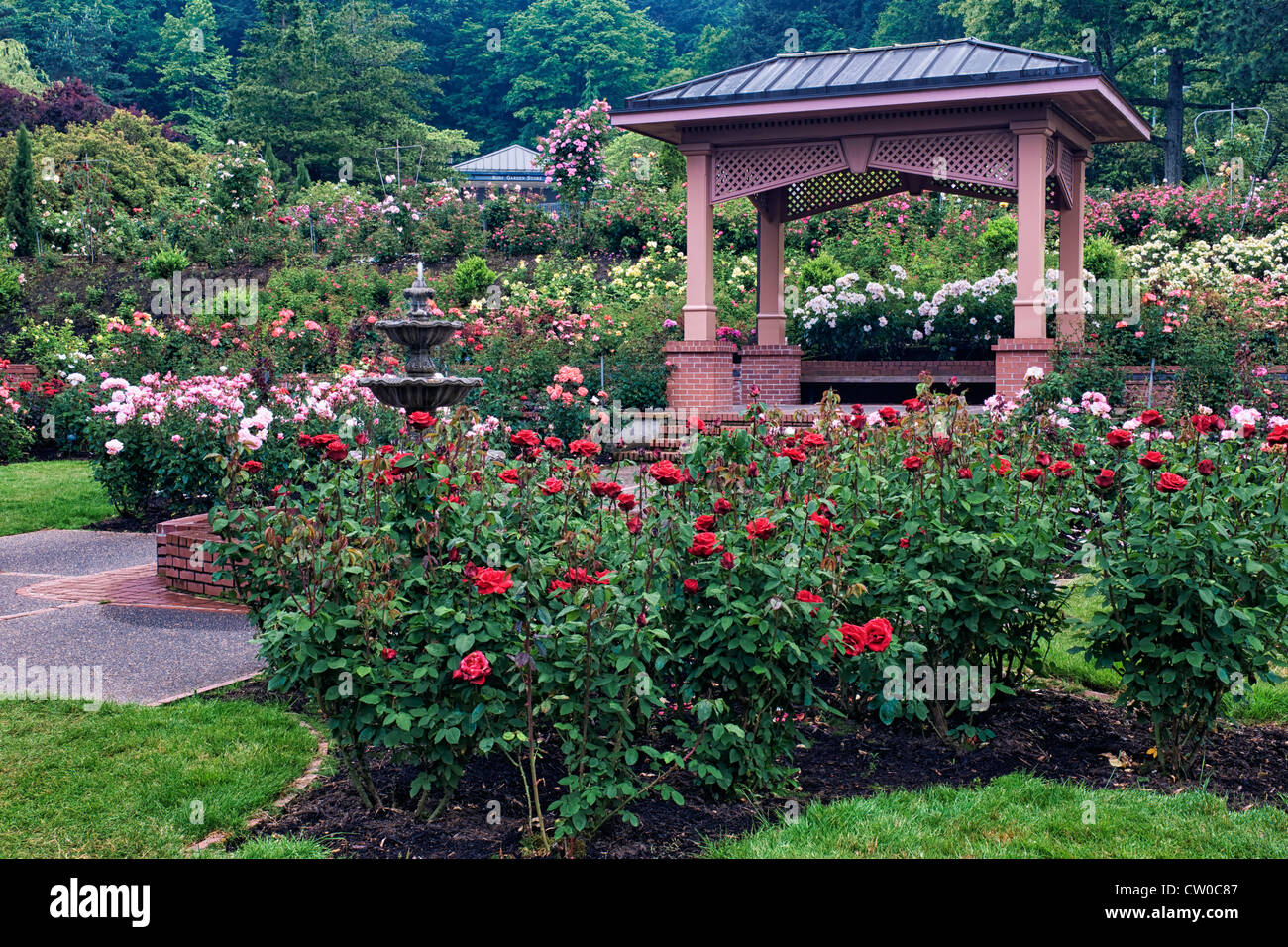 Portland's International Rose Test Garden in Washington Park displays 7,000 rose plants and 550 varieties of roses. - Stock Image