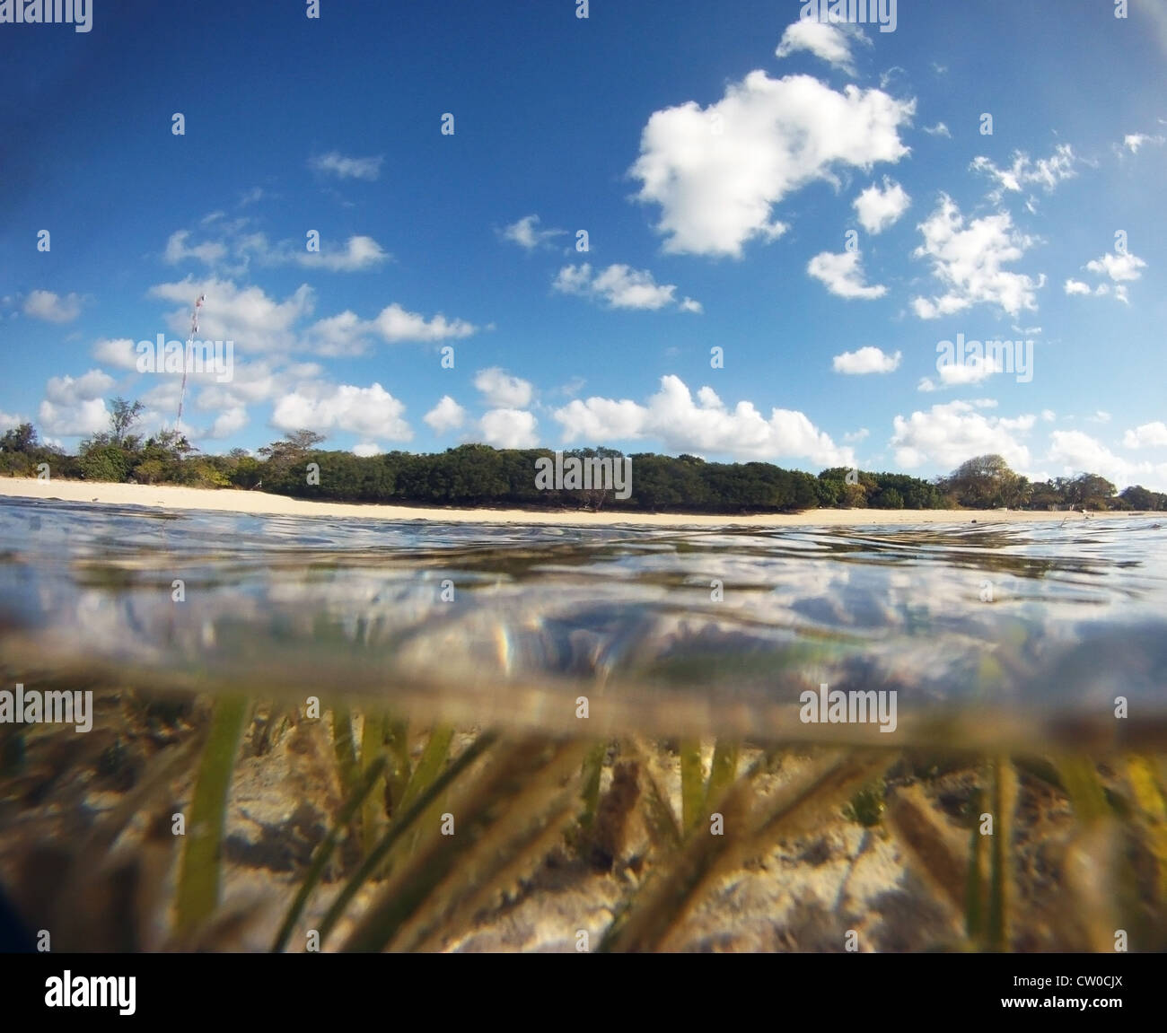 Seagrass beds in the shallows at Masig Island (aka Yorke Island), Torres Strait, Australia - Stock Image