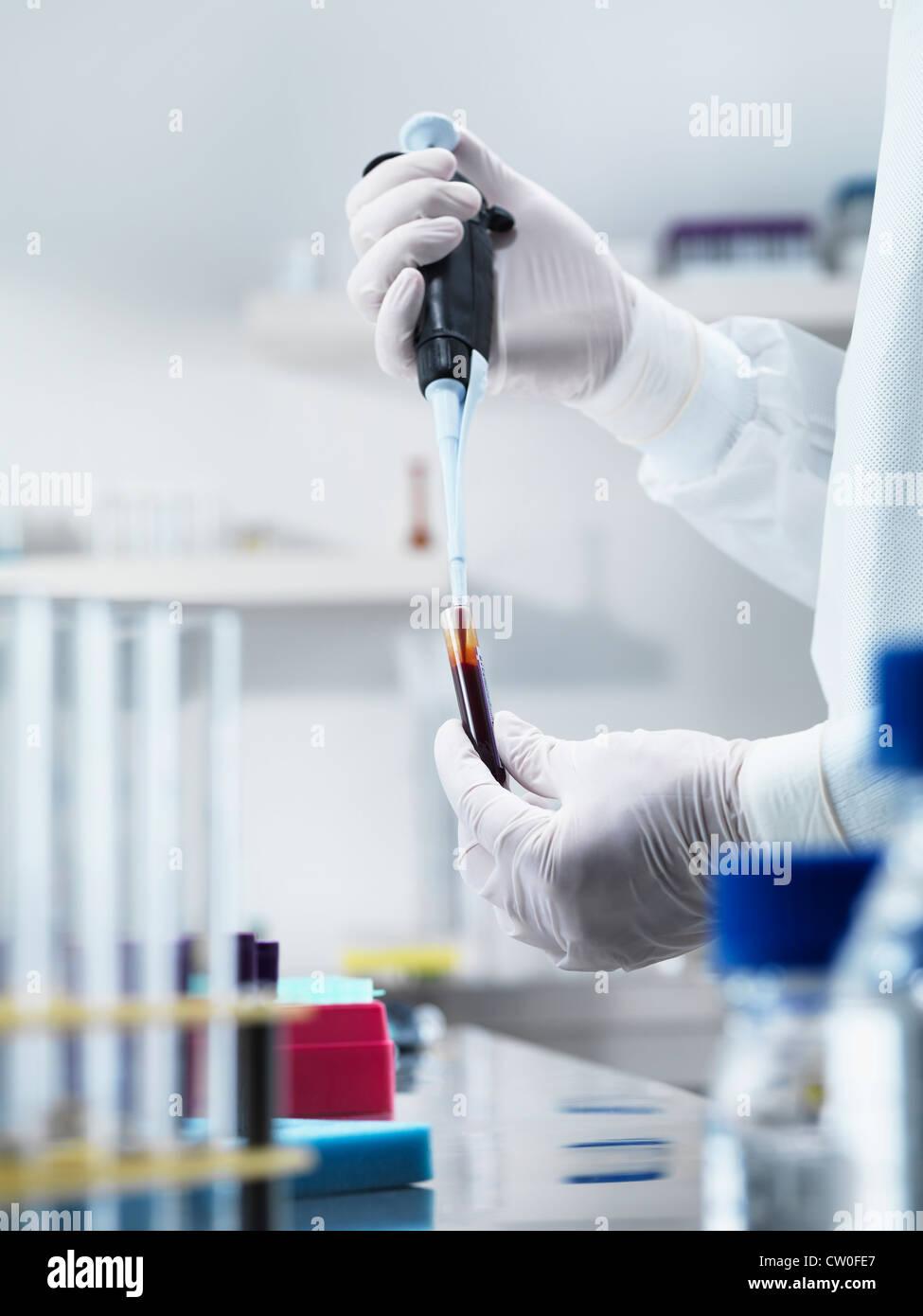 Scientist pipetting liquid in test tube Stock Photo
