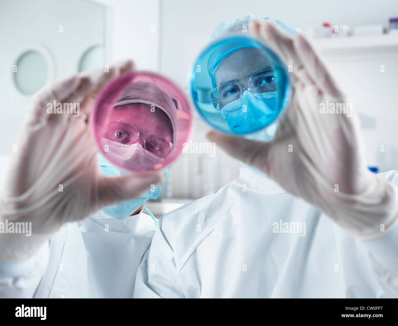 Scientists examining petri dishes in lab Stock Photo