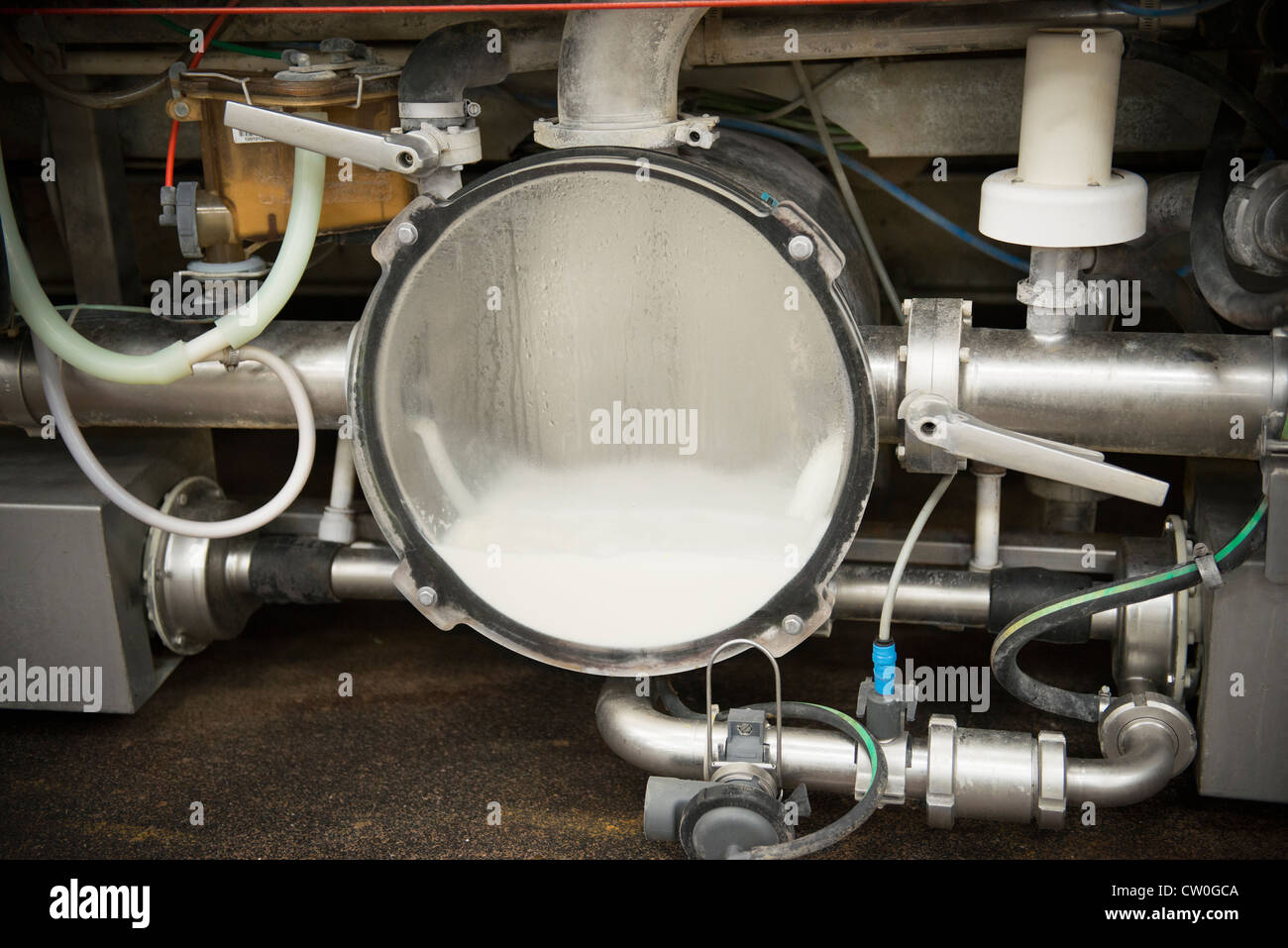 Milk in collection machinery in parlor - Stock Image