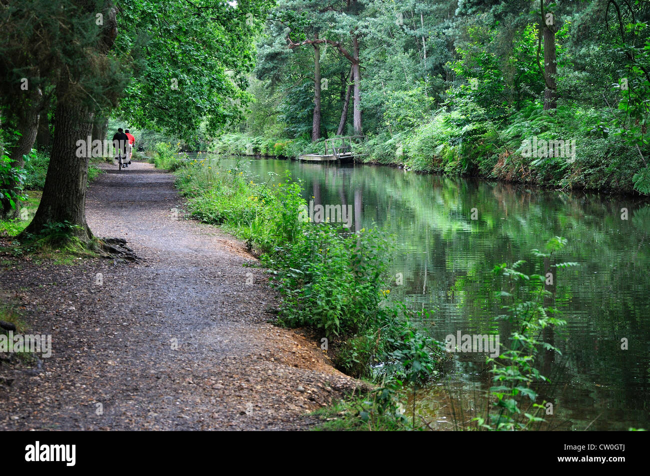 A view of the Basingstoke Canal UK - Stock Image