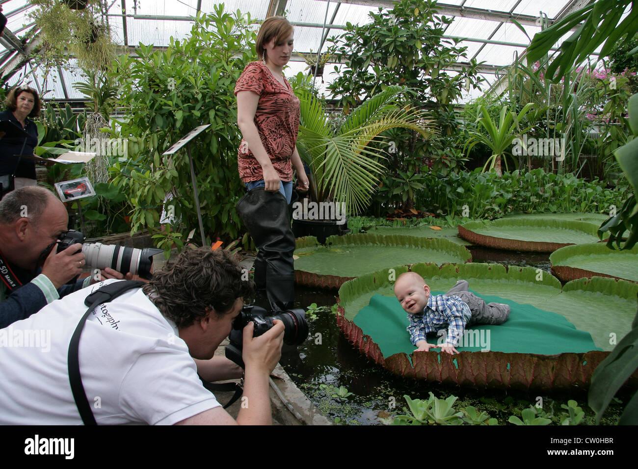 Victoria amazonica Amazonica.Baby.Photography.Hortus botanicus.baby photo.Netherlands. - Stock Image