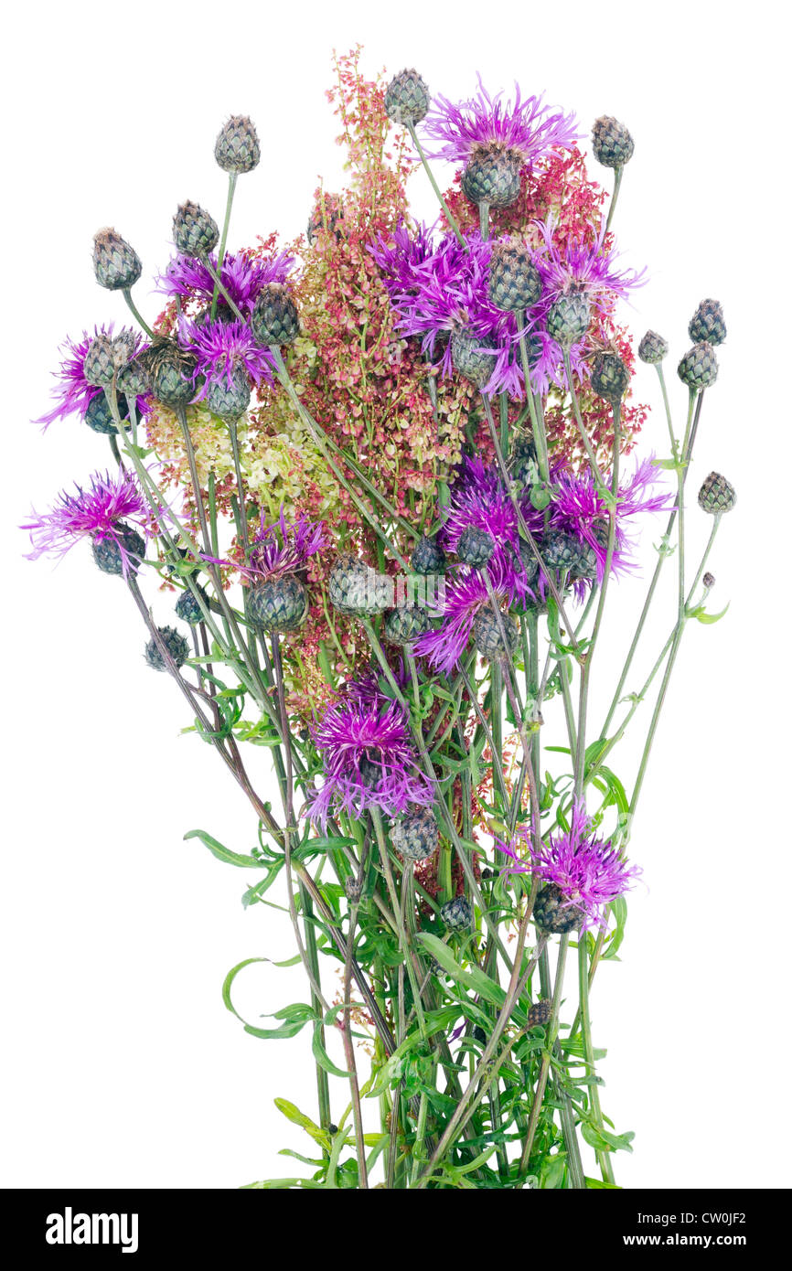 Ugly Flowers Stock Photos \u0026 Ugly Flowers Stock Images , Alamy