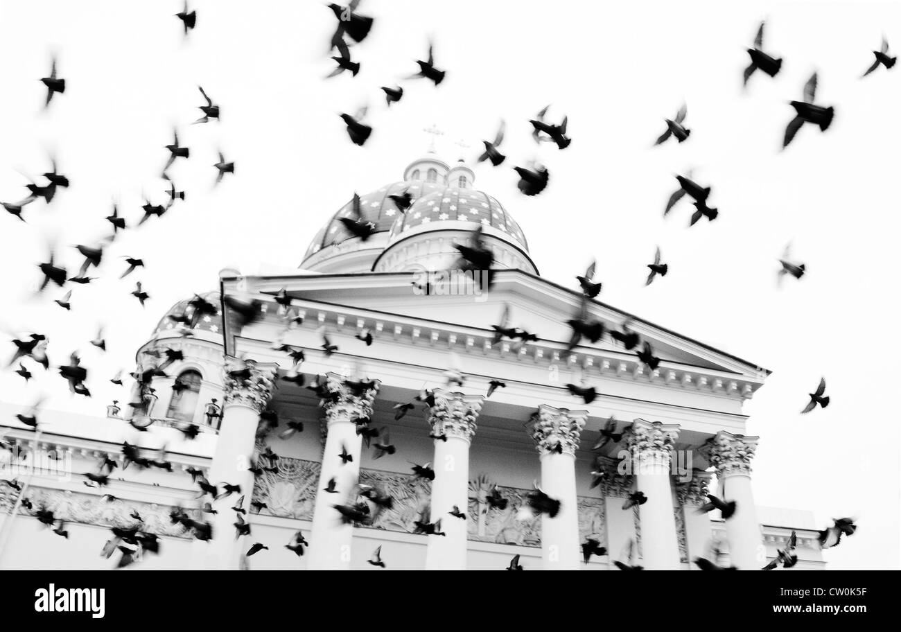 Birds flying around Trinity Cathedral, Saint Petersburg, Russia - Stock Image