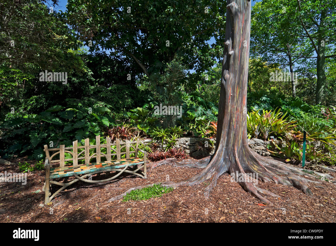 Fairchild Tropical Botanical Gardens at Coral Gables, a suburb of Miami,  Florida. Rainbow eucalyptus tree. - Stock Image
