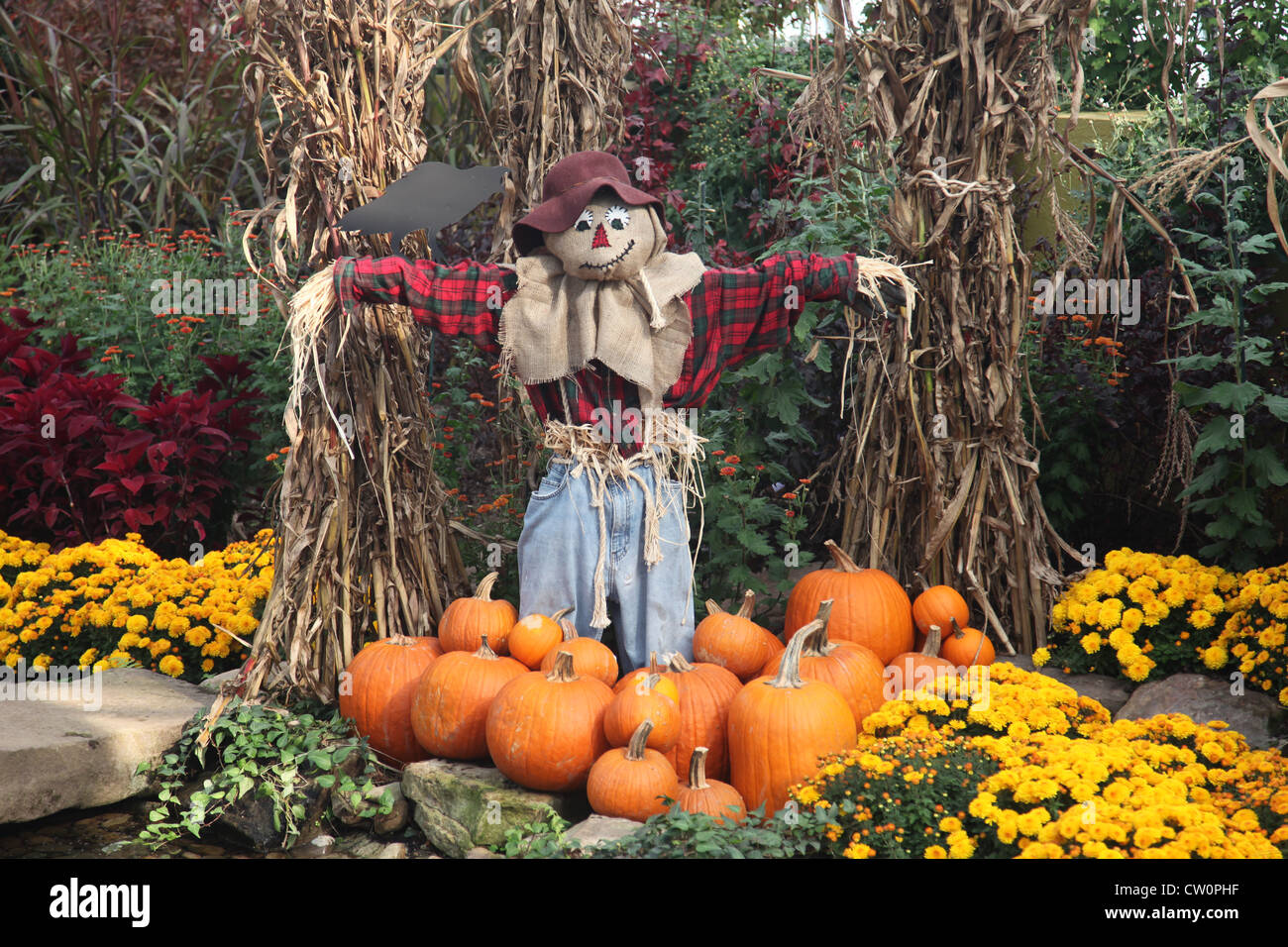 Halloween decoration with scarecrow and pumpkins - Stock Image