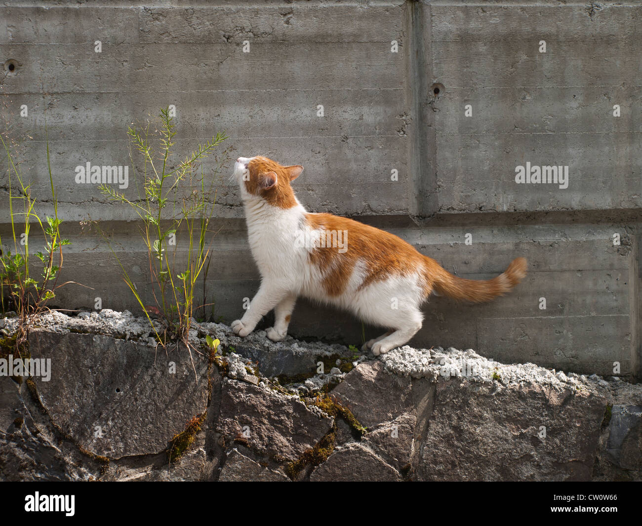 Cat And 9 Lives Stock Photos Amp Cat And 9 Lives Stock