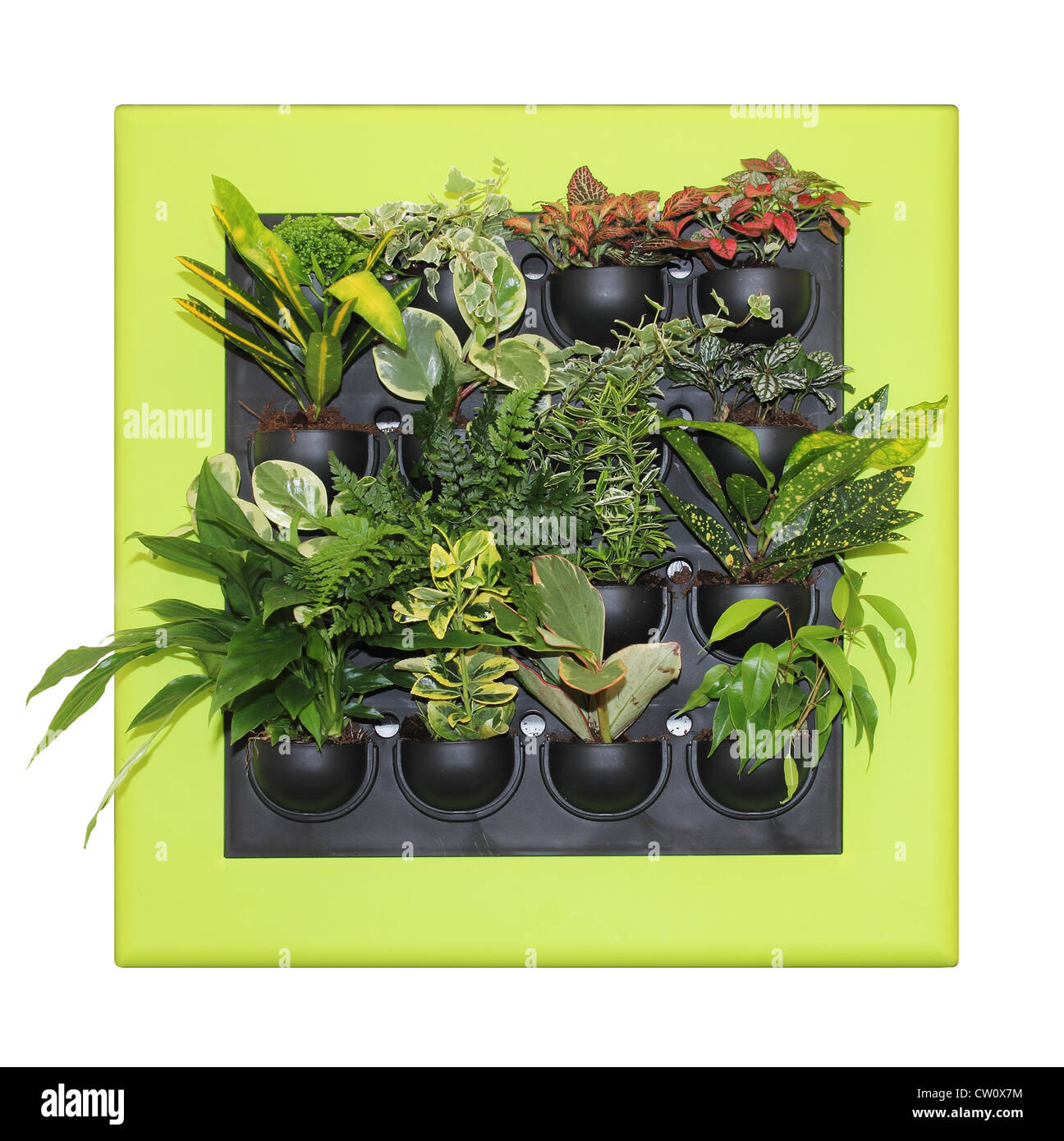 Ornamental plants large and beautiful leaves Stock Photo