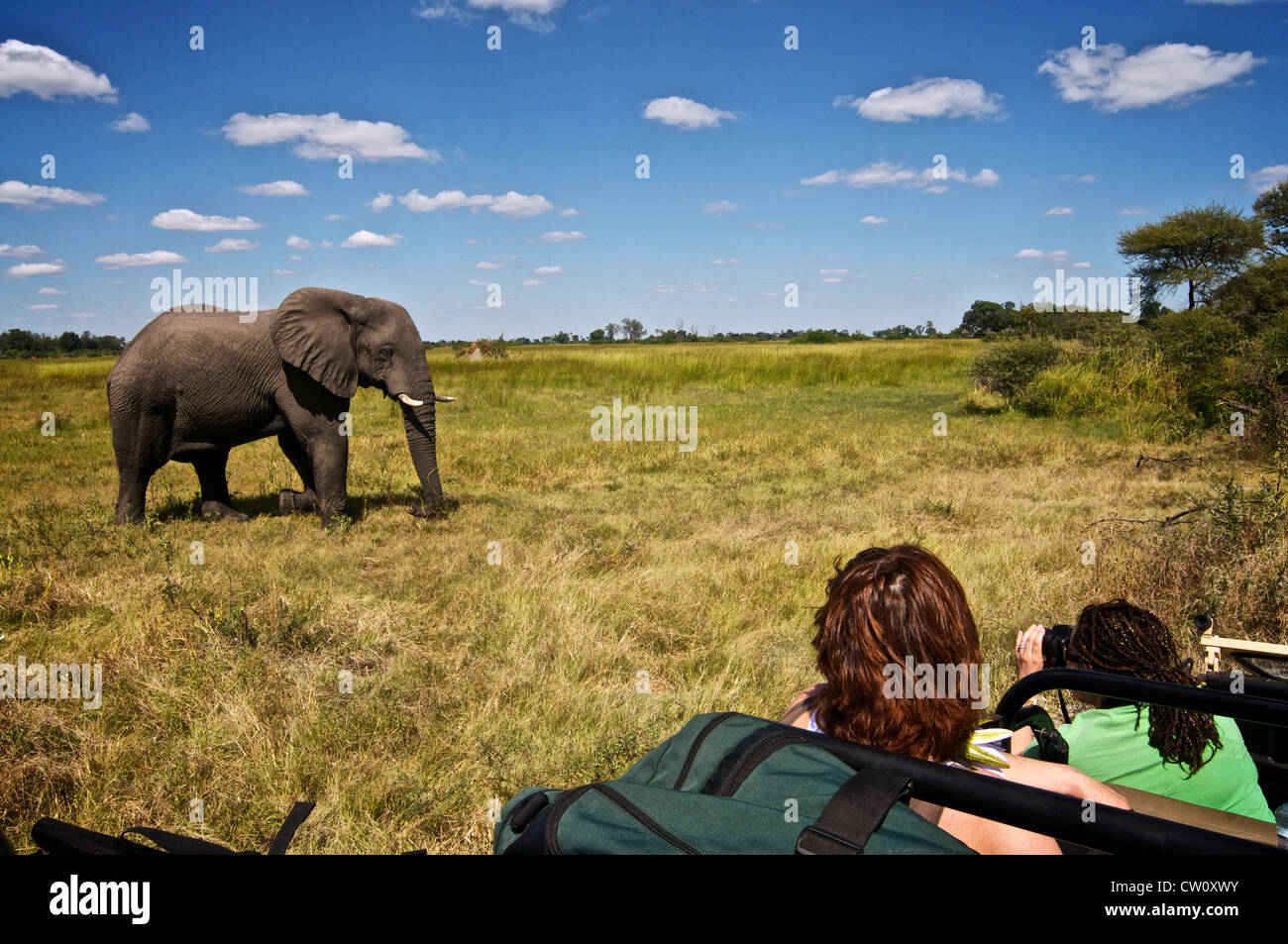 Tourists watching elephant on safari trip. Botswana, Africa. Stock Photo