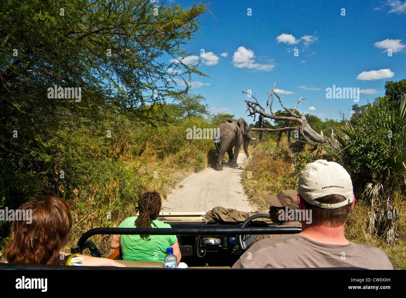 Tourists watching elephant on a safari trip in Botswana, Africa. - Stock Image