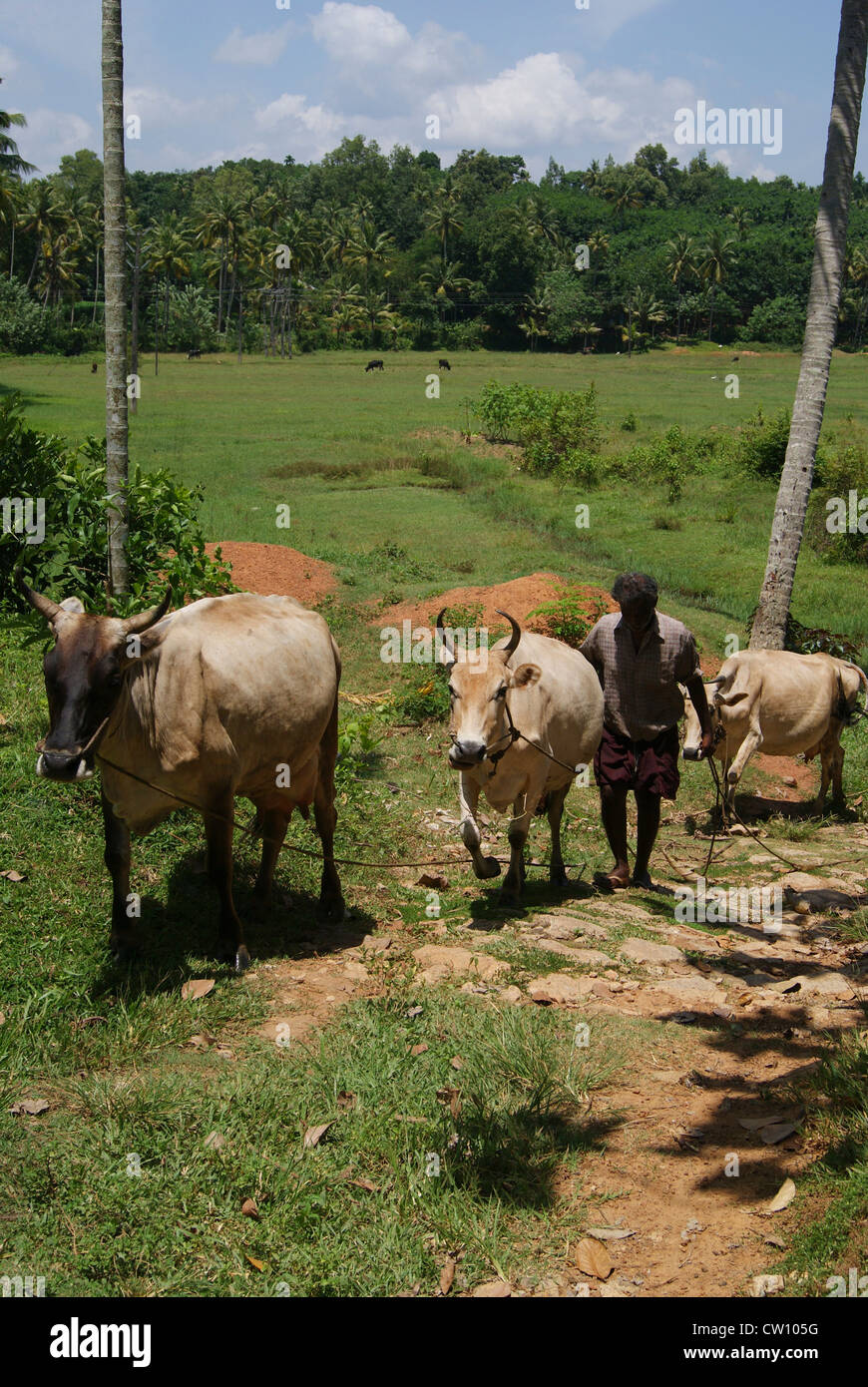 Farmer Kerala Stock Photos Farmer Kerala Stock Images Alamy