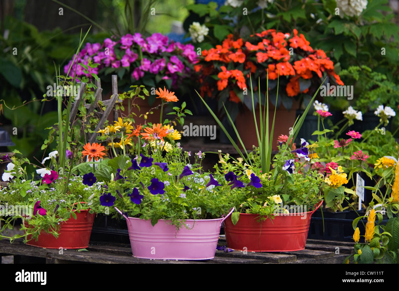 Variety of Flowers for Sale at Flower Shop in Buckner, Kentucky - Stock Image