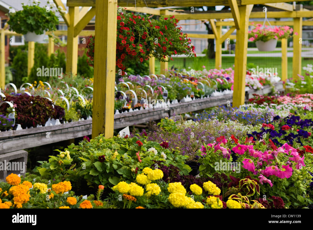 Plants and Flowers for Sale at Flower Shop in Buckner, Kentucky - Stock Image