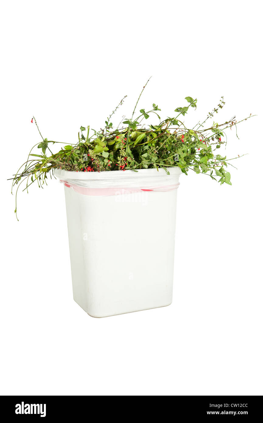 A white trash can full of trimmed plants, isolated on white, ready to be put in the greenery recycling bin. - Stock Image
