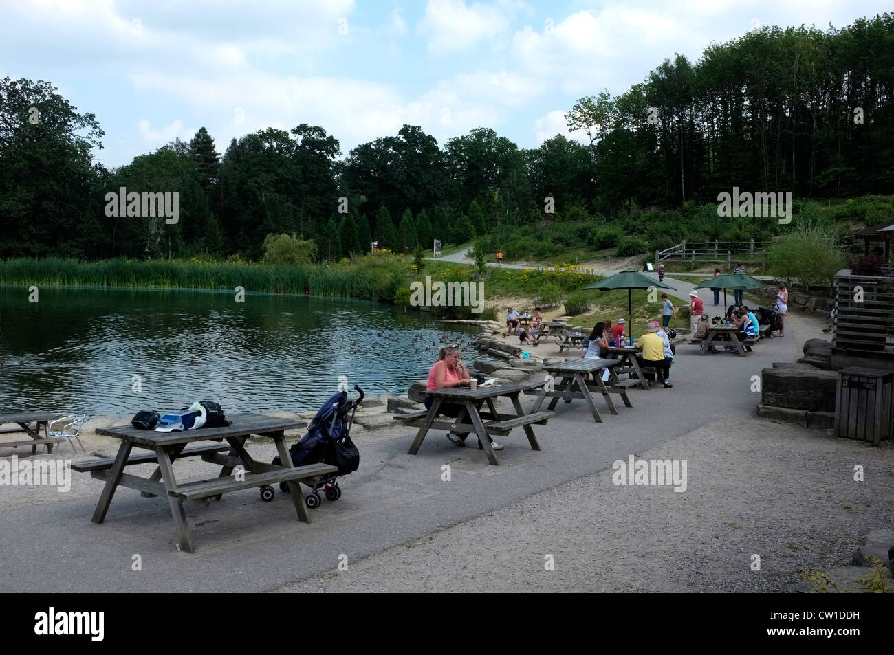 bedgebury national pinetum and forest goudhurst kent uk 2012 - Stock Image