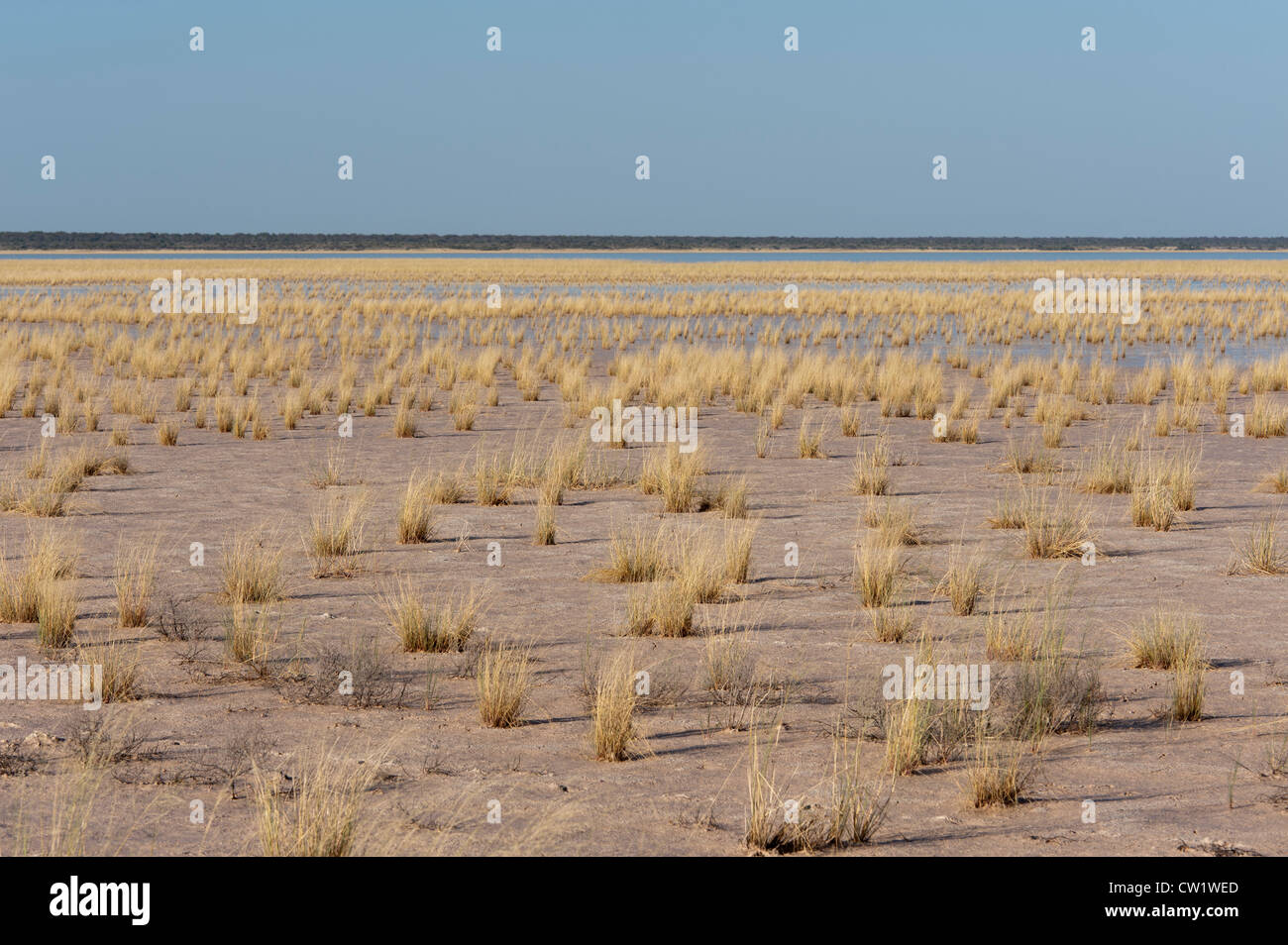 Fischer's Pan after rainfall, Etosha National Park, Namibia, Africa - Stock Image