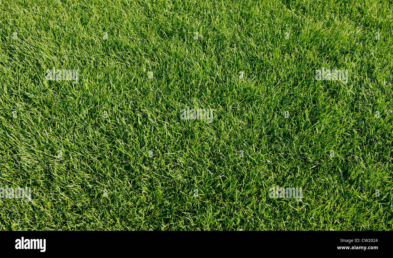 new spring green grass for design - Stock Image