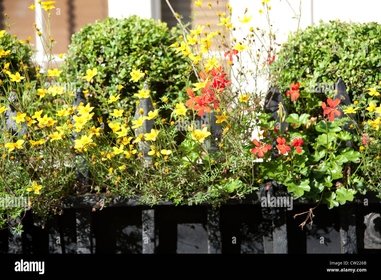 Window Box with red and yellow flowers - Stock Image