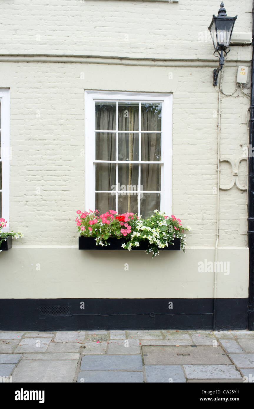Window box and flowers - Stock Image