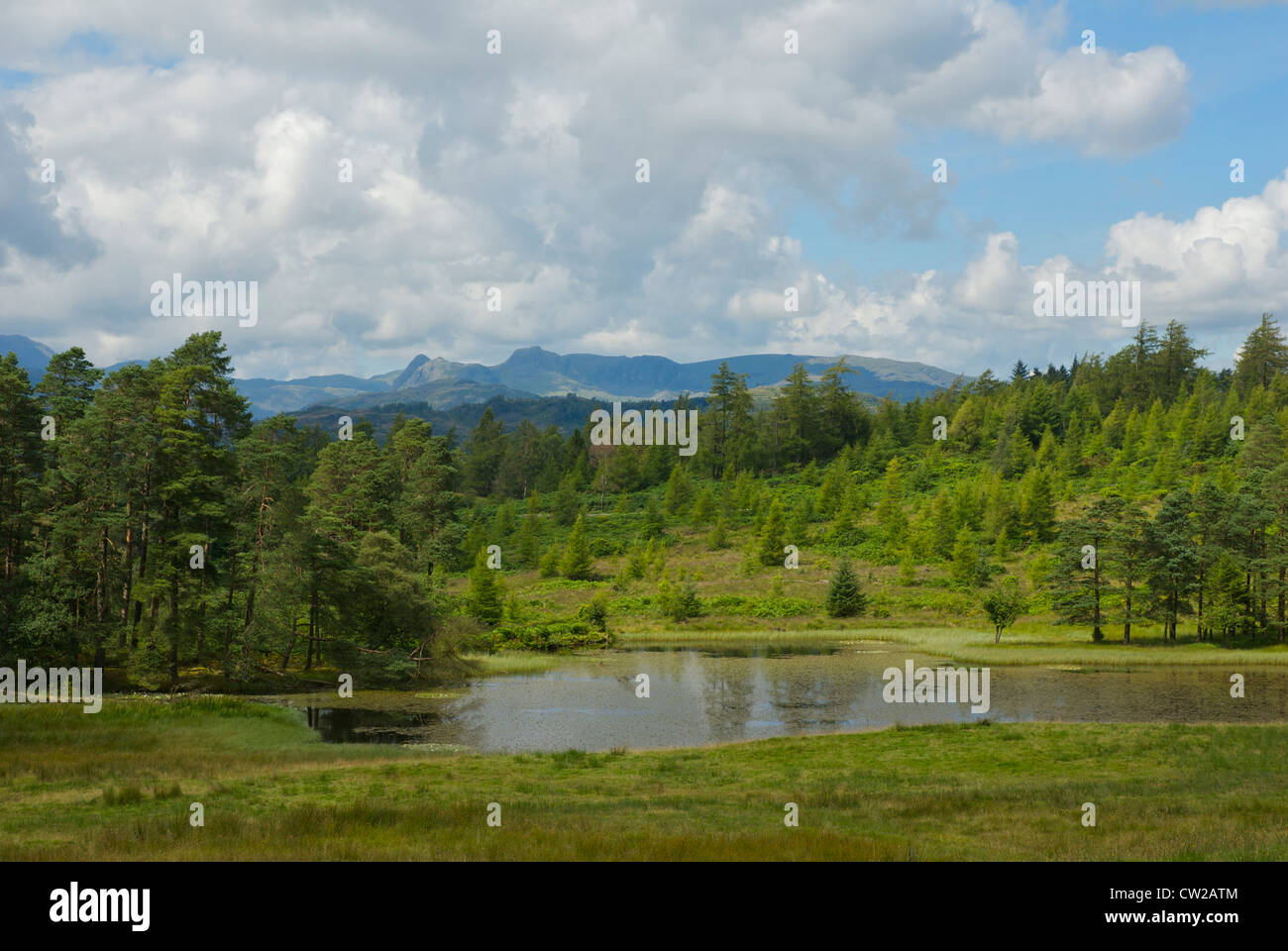Wraymires Tarn on Claife Heights, Lake District National Park, Cumbria, England UK - Stock Image