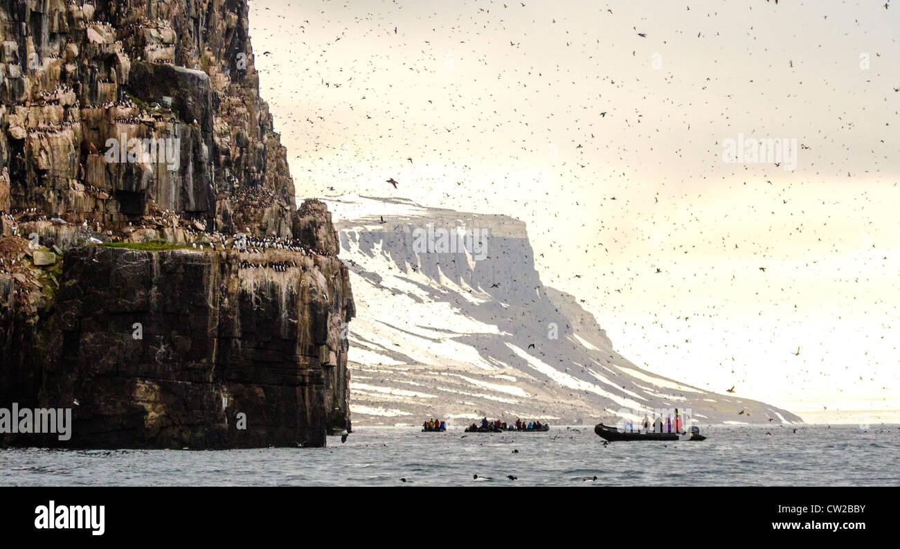 Guillemots (Uria lomvia) Svalbard Norway Arctic Circle Stock Photo