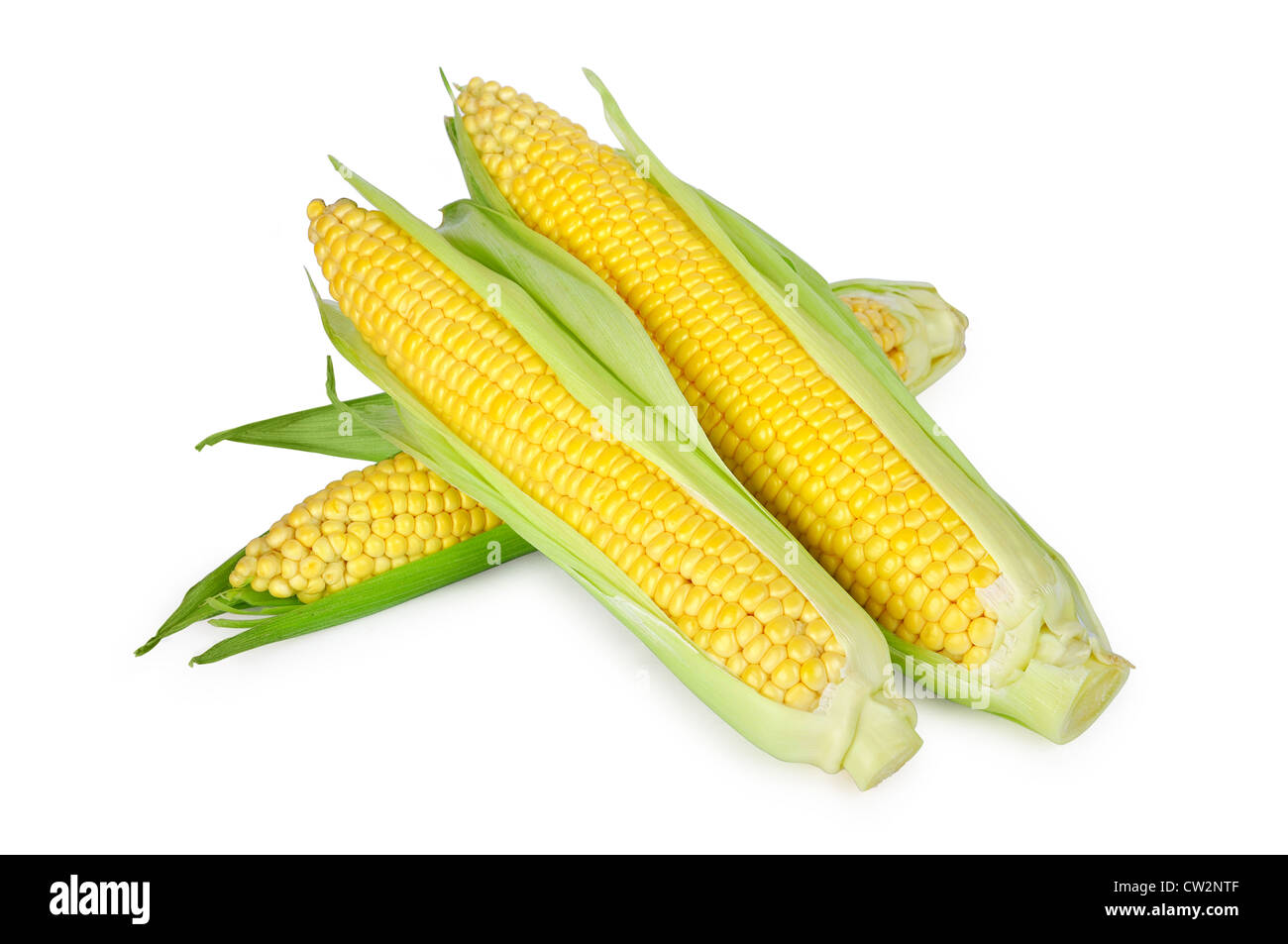 An ear of corn isolated on a white background - Stock Image