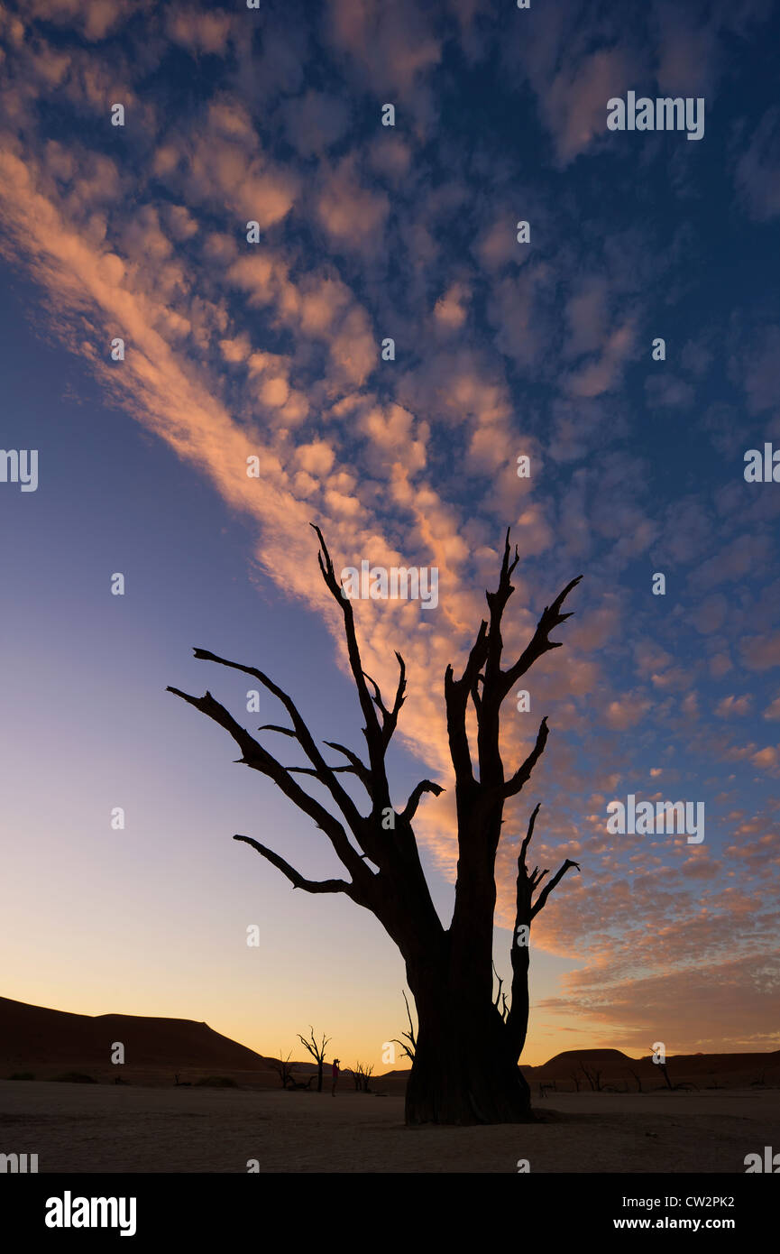 Salt pan. Dead Vlei.Namibia - Stock Image