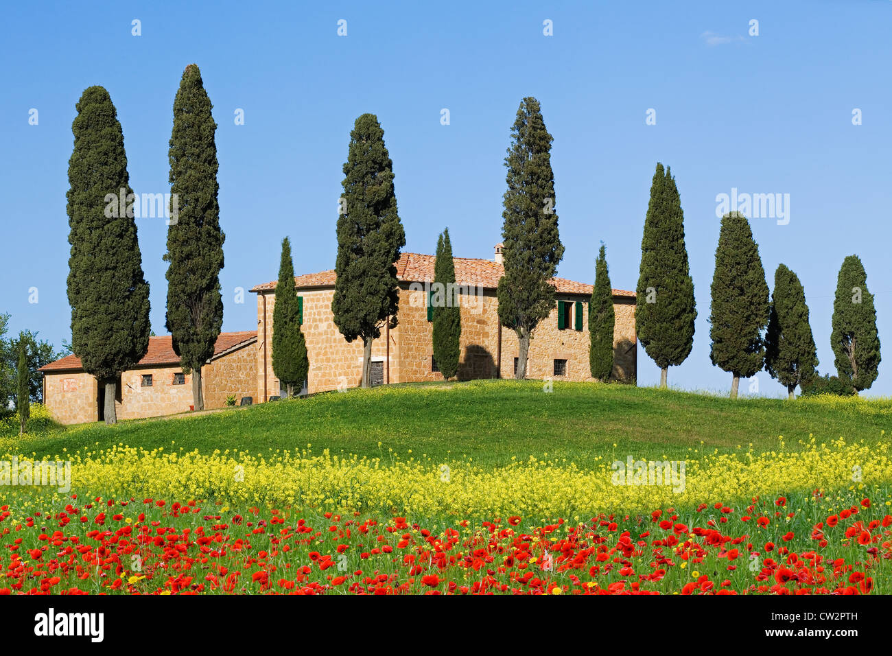 Villa with Cypress trees and Poppies near Pienza, Tuscany - Stock Image
