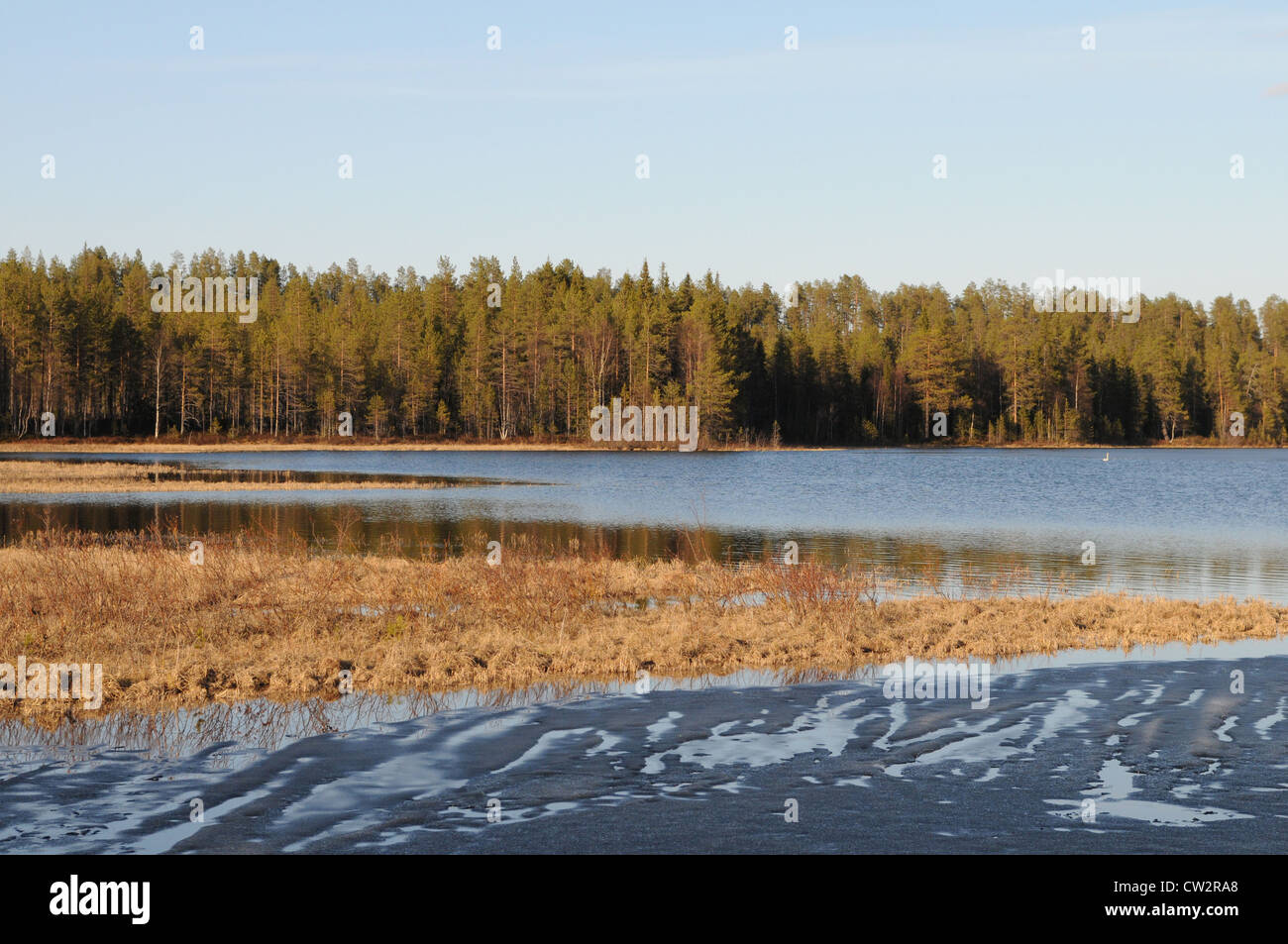 Typical Finnish lake in the coniferous forest, Kuusamo, Finland - Stock Image