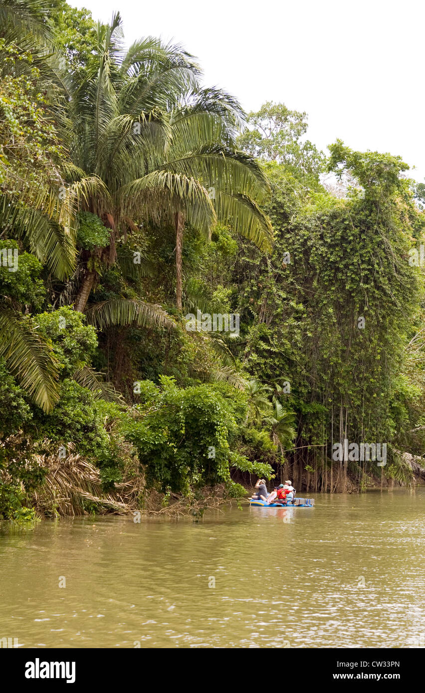 Alajuela Province, Costa Rica: Exploring the Rio Frio by kayak puts you very close to an abundant collection of - Stock Image