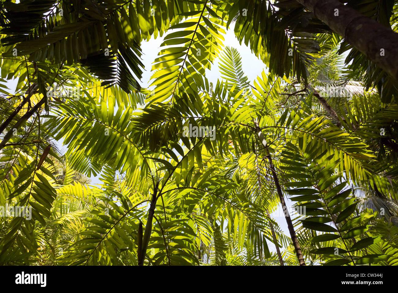 Manuel Antonio, Costa Rica: Palm jungles dot the hillsides of this vacation area hamlet. - Stock Image