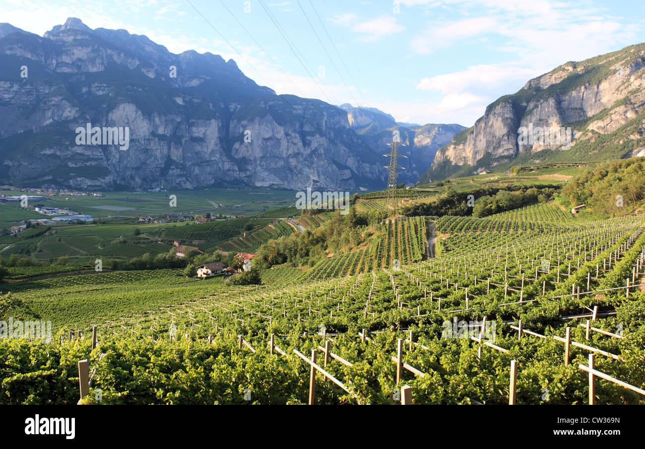 Vineyard above San Michele, Trentino Alto Adige region, Italy - Stock Image