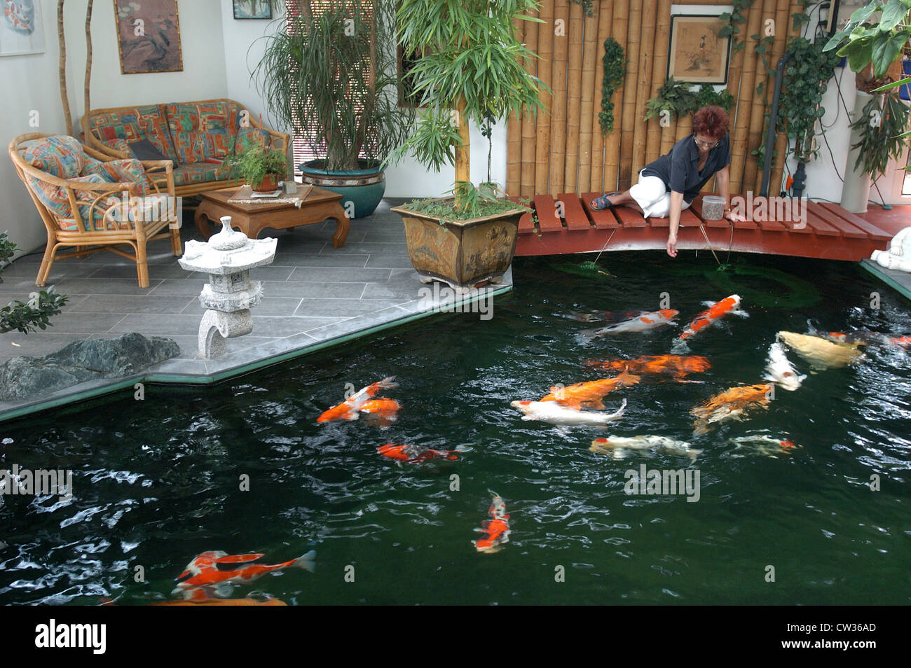 Indoor koi pond in reigoldswil switzerland stock photo for Pet koi fish tank