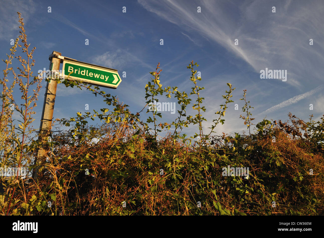 Bridleway sign amongst hedgerows - Stock Image