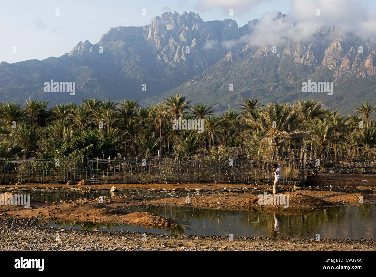 A oasis near Hadibo, Socotra Island, Yemen,  Western Asia, Arabian Peninsula. - Stock Image