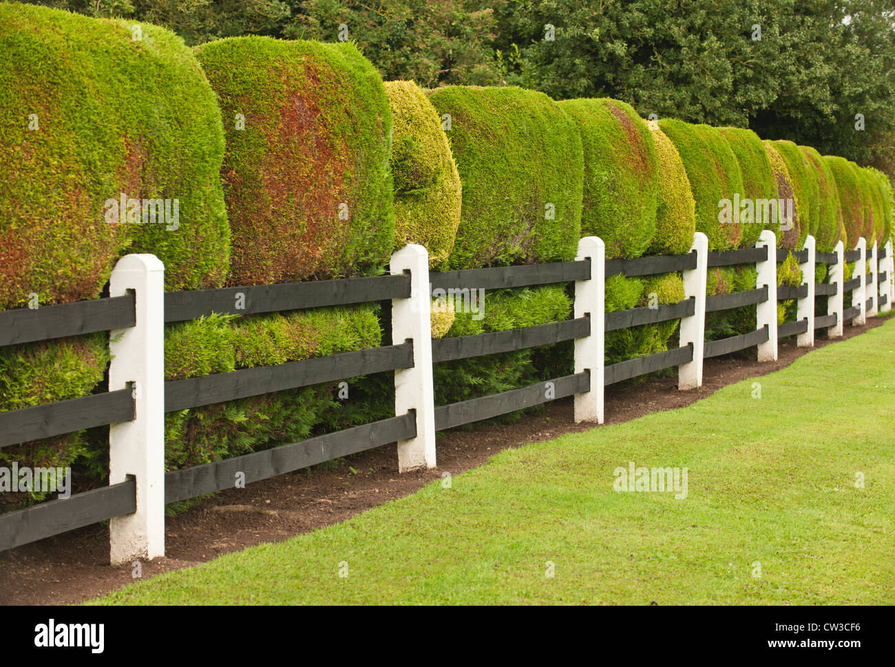 The Formation Of Some Garden Hedges Against A Railing In Ireland