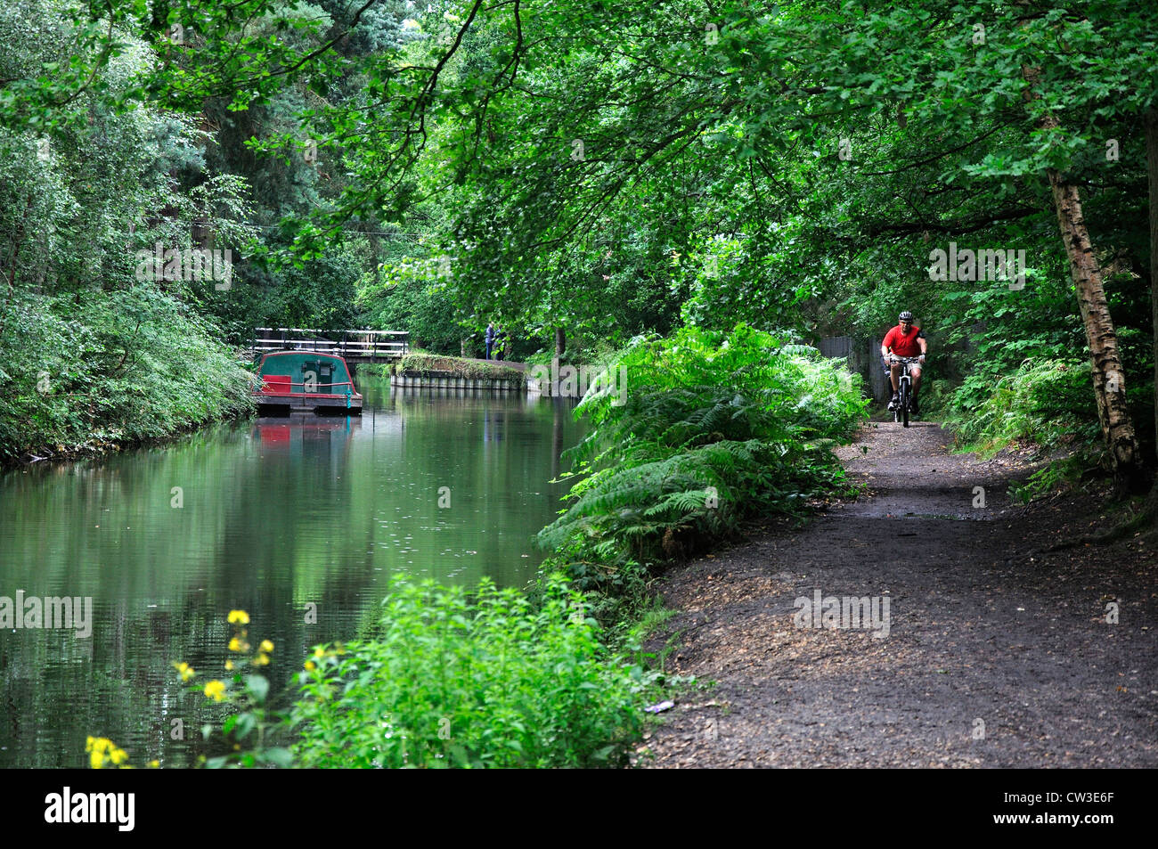 A view of the Basingstoke Canal and towpath with a cyclist UK - Stock Image