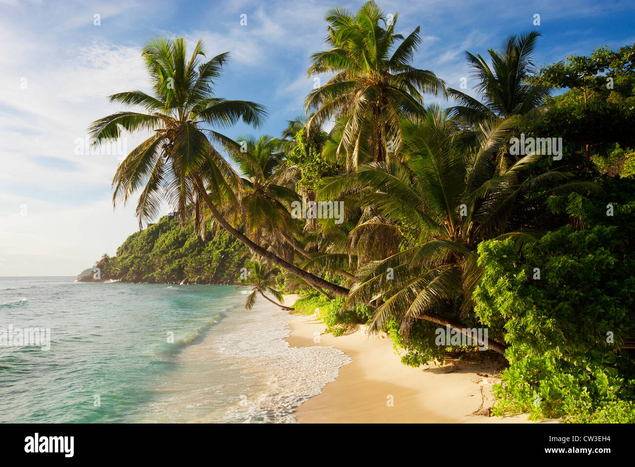 Leaning palm trees on beach,Cousine Island.Seychelles - Stock Image