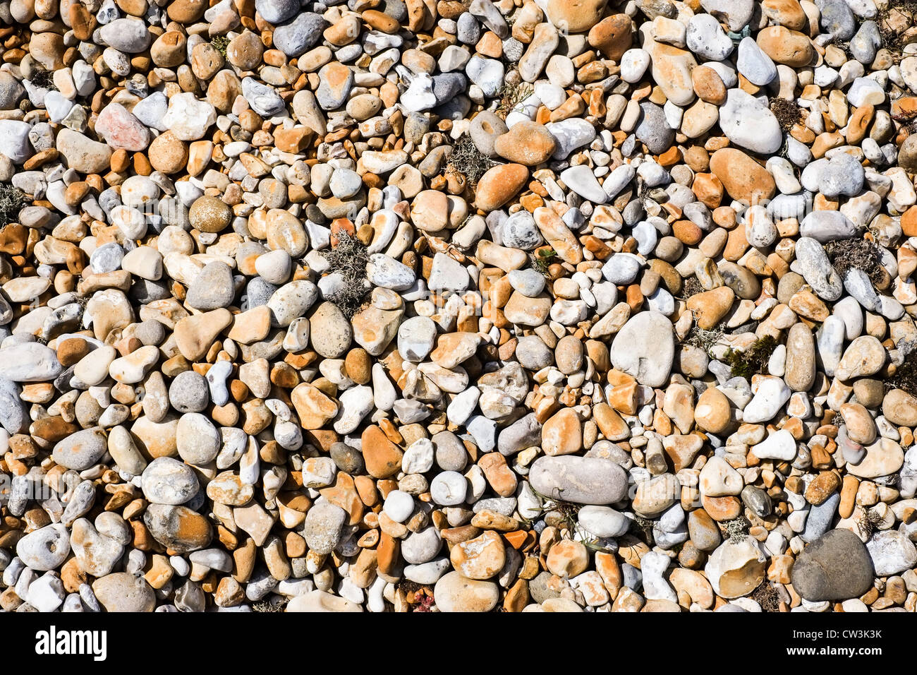 Pebbles on a stone beach complete with clumps of seagrass - Stock Image