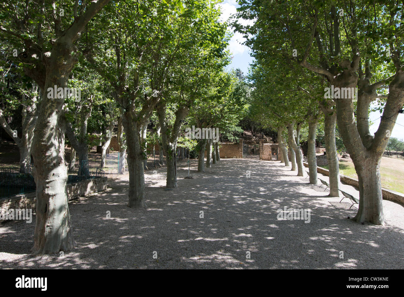 avenue of plane trees in grounds of Prieure St-Michel-de-Grandmont a 13th century priory above the Languedoc Plain - Stock Image