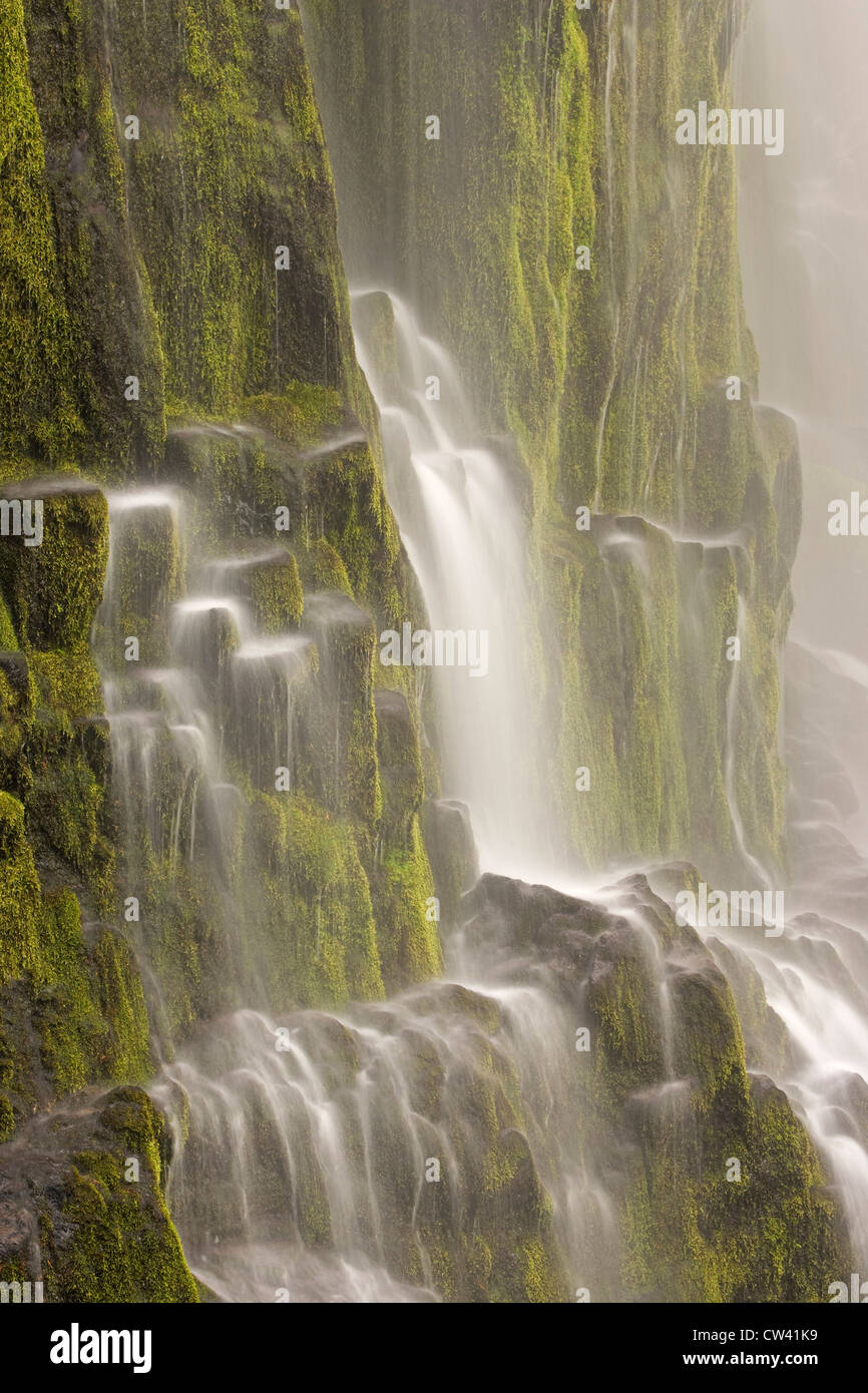 Waterfall on a mountain, Proxy Falls, Willamette National Forest, Oregon, USA Stock Photo