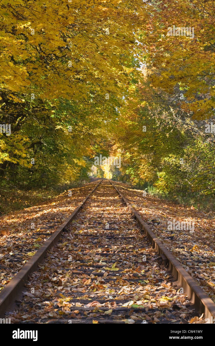 Railroad track passing through a forest, Oregon, USA - Stock Image
