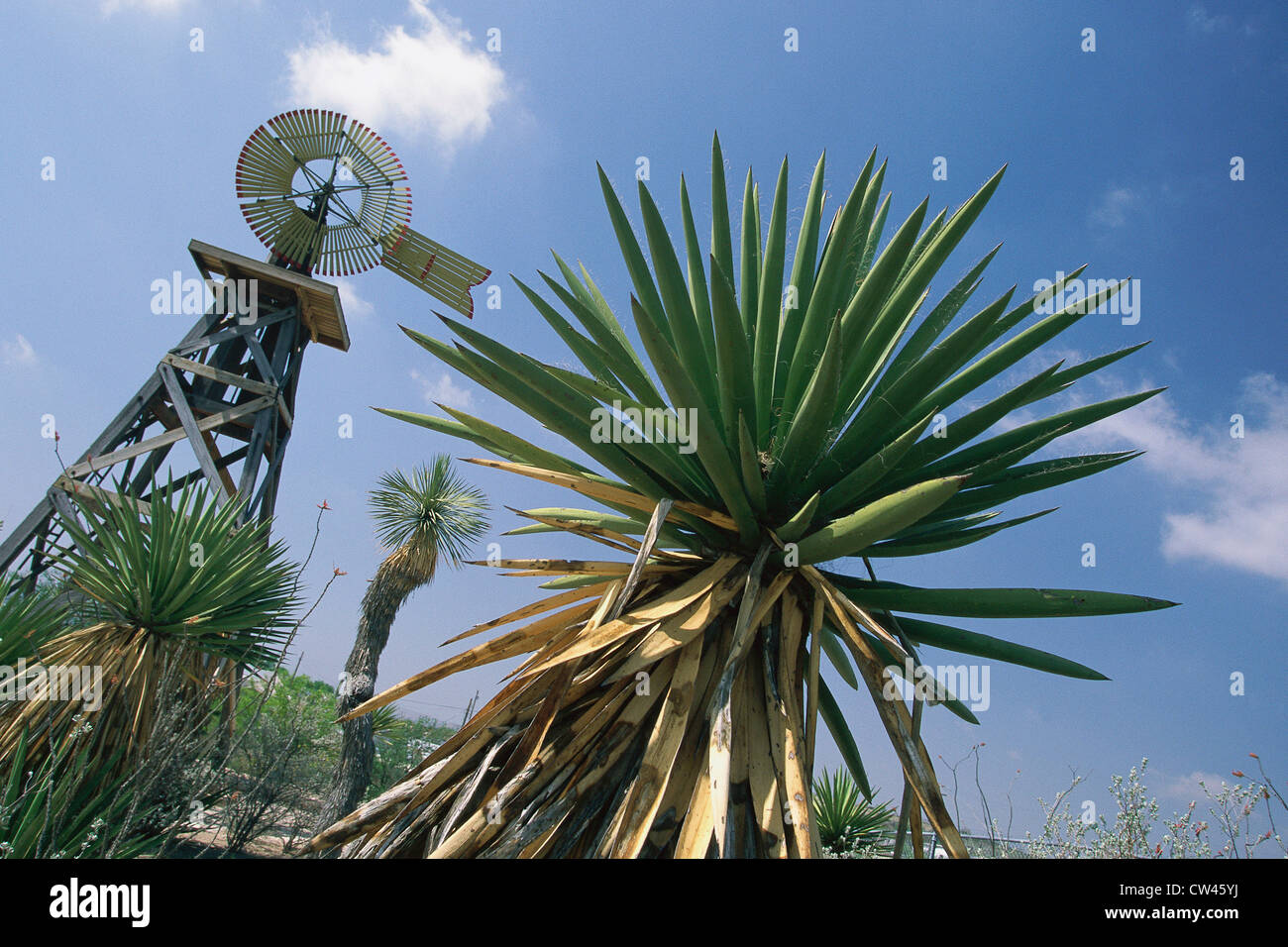 Shrub with windmill in background, Langtry, Texas Stock Photo