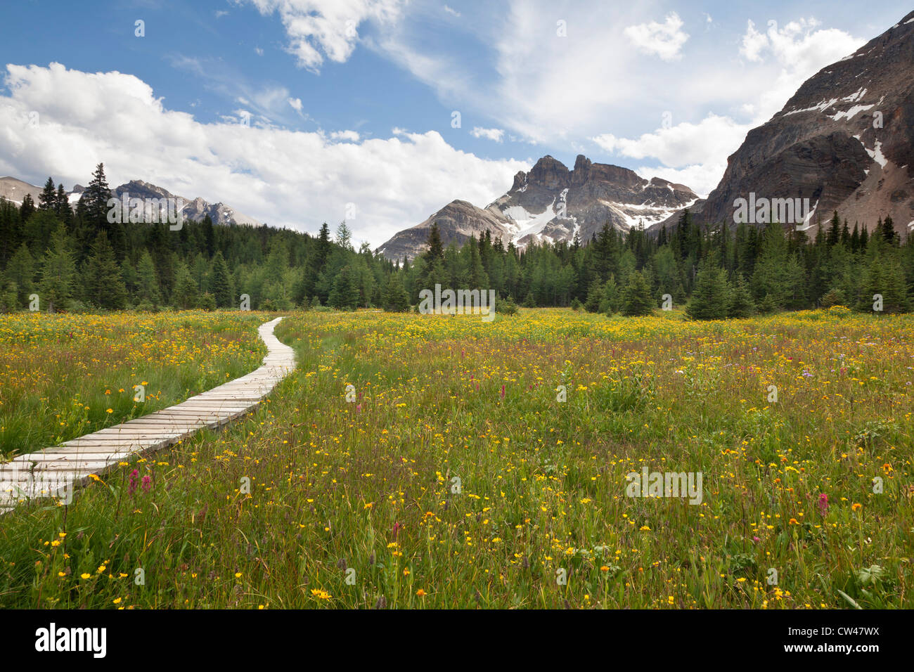Canada, Mount Assiniboine Provincial Park, Meadows from Naiset cabins to Gog Lake Stock Photo