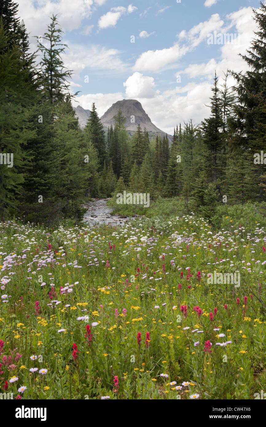 Canada, Mount Assiniboine Provincial Park, Gog Lake, Meadows and mountains Stock Photo
