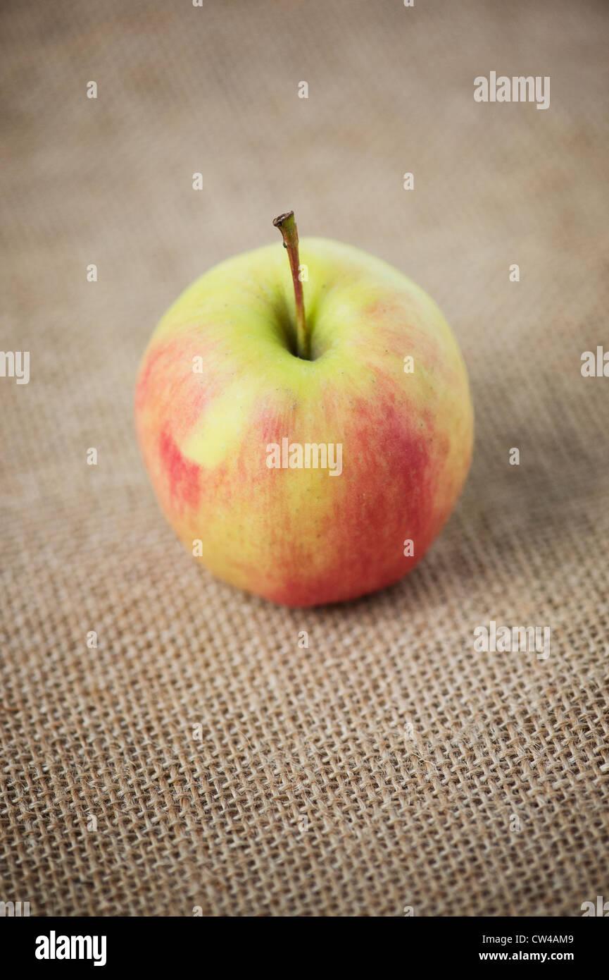 Eating apple on hessian - Stock Image